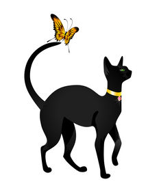 stock photo of black cat  - Beautiful black cat on a white background with the butterfly - JPG