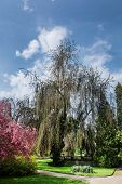 Trees In The Castle Garden
