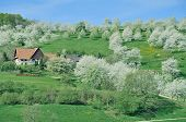 Springtime in Black Forest,Germany
