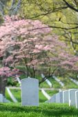 pic of arlington cemetery  - Arlington National Cemetery in Spring  - JPG