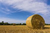 stock photo of threshing  - agricultural landscape with bales of hay in the field of grain threshed - JPG