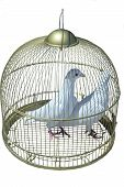 Two White Pigeon In Cage
