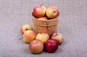 Apples In A Barrel