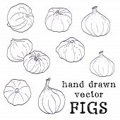 Sketched figs