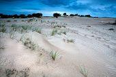 Sand Dunes In Evening