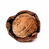 Crude Walnut Isolated On White Background