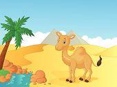 Cartoon camel with desert background