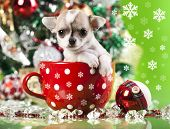 puppy christmas, animal;