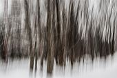 Abstract motion blur of winter forest during snowstorm created by camera movement