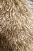 Photo Background Sheep Fur