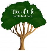 Illustration of a close up tree with text