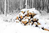 pine logs in winter forest under snow