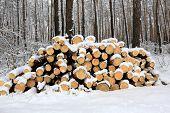 logs under snow in winter forest