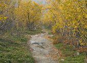 Trail on a hillside. Bushy yellow surrounding.