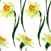 seamless pattern with narcissus