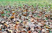 Withered Leaves B