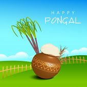 Happy Pongal, harvesting festival celebrations in South India with rice in traditional mud pot, sugarcane and wheat grains on nature view background.