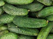 Vegetables  Cucumbers  Meal