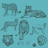 Wild Cat Marker Sketch  Collection