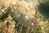 Cobweb at dawn