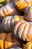 Muscade De Provence Cucurbita Pumpkin Pumpkins From Autumn Harvest