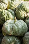 Triamble Tristar Cucurbita Pumpkin Pumpkins From Autumn Harvest