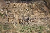 stock photo of deer family  - Small herd of roe deer  - JPG
