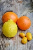 pic of kumquat  - Set of citrus fruits from tangerines - JPG