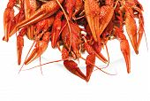 pic of crawfish  - appetizing red boiled crawfish on a white background - JPG