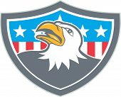 foto of bald head  - Illustration of an american bald eagle head looking up viewed from the side with american stars and stripes flag in the background set inside shield crest done in cartoon style - JPG
