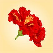 stock photo of hibiscus flower  - Tropical flower red hibiscus blossom simple flower vector illustration - JPG