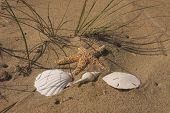 stock photo of sanddollar  - several collectibles from the beach lay on the sand - JPG