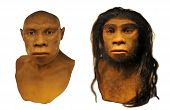 Full Scale Model Of The Neanderthal Man Face