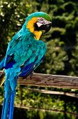 Colourful Macaw parrot on the fence