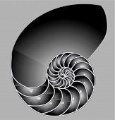 Shell_Half