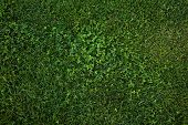 Green Grass Seamless Texture. Green Grass Background Texture. Field Of Fresh Green Grass Texture As poster