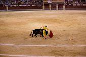 MADRID - AUGUST 8: The torero Antonio Espaliu fights a bull named Colgado in the Las Ventas bullring