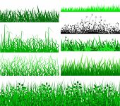 Grass Fringes