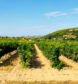 Vineyard alley