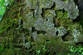 Moosbedeckte Felsen-Hintergrund