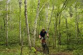Mountain biking through dense forest