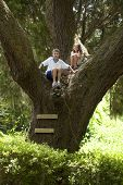kids climbing high up in large oak tree