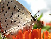 Tiny Butterfly - Cropped
