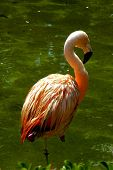Perfect Flamingo
