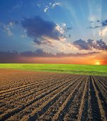 agricultural field and sunset