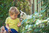 Game. Newborn White Goats In Nature With Boy Kid. Summer Landscape With Farm Animals. Domestic Goat  poster