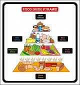 VECTOR - Food Guide Pyramid - Including Groups ( Grain, Fruit, vegetable, milk, meat, other ) - Usef