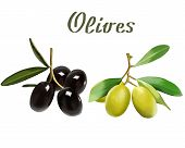 Ripe Olives On A White Background In Illustration.illustration Of Ripe Olives On A White Background. poster