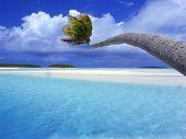 Palm On Lagoon