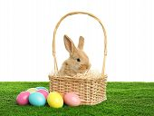 Adorable Furry Easter Bunny In Wicker Basket And Dyed Eggs On Green Grass Against White Background poster